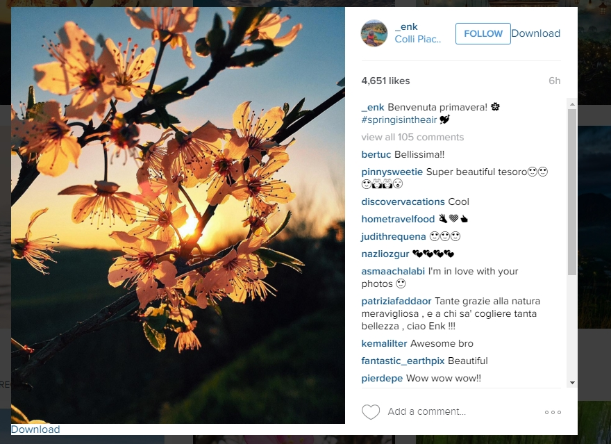 awesome instagram image of flowers